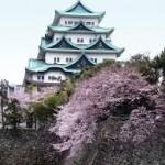 ウェスティン名古屋キャッスルからの名古屋城桜