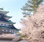 名古屋城桜祭り