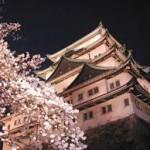 名古屋城夜桜