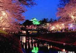 岡崎公園夜桜