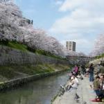山崎川四季の道お花見スポット