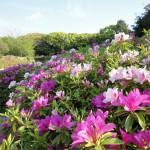 ツツジ名城公園