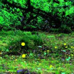 相生山緑地