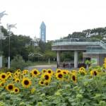 東山動植物園ひまわり