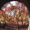 愛岐トンネル紅葉