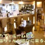 名古屋猫カフェなーごなーご