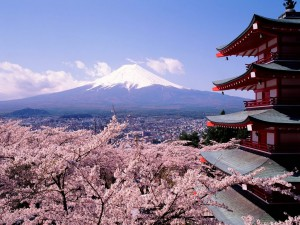 fuji-japan-cherry-blossoms