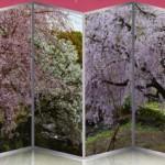 白鳥庭園桜花見茶会
