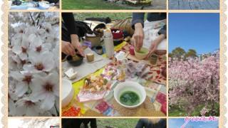 名古屋桜花見茶会2016