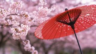 名古屋の桜名所