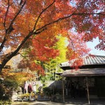 日本庭園 有楽苑