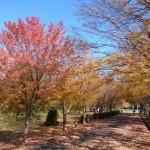 県営都市公園 小幡緑地