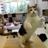 【愛知県】名古屋周辺の猫カフェ口コミ人気おすすめ9選